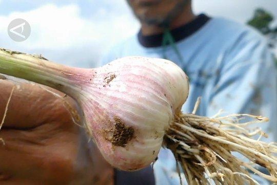 Bupati Temanggung desak Pemprov Jateng stop impor bawang putih