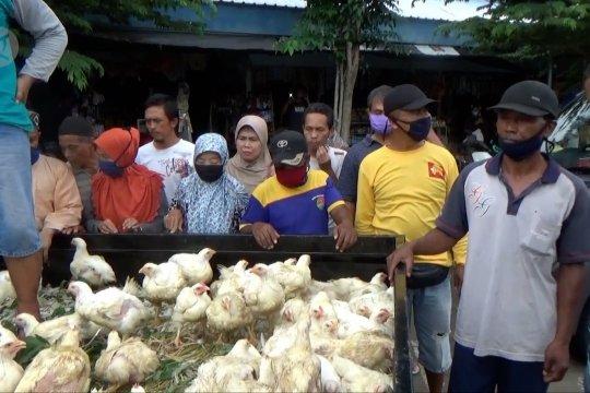 Ketika peternak disambut meriah warga karena bagi-bagi ayam gratis