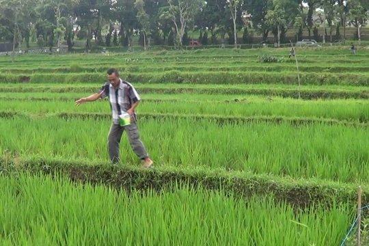 Temanggung tambah seribu hektare tanaman pangan