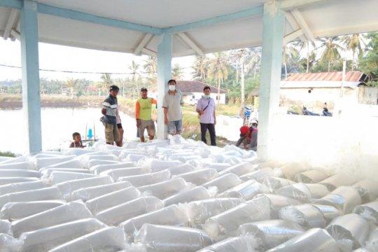 KKP distribusikan benih ikan lele dan udang galah unggul