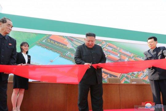 Kim Jong Un resmikan pabrik pupuk