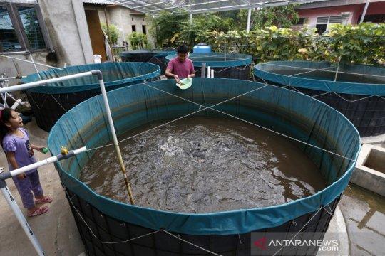 Budidaya ikan lele sistem bioflok