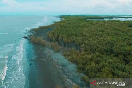 Peneliti: Konservasi mangrove bisa kurangi 10-30 persen emisi tahunan