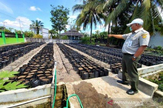 Kalteng siapkan tanaman hortikultura untuk 1.000 KK terdampak COVID-19