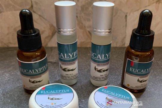 Antivirus eucalyptus untuk corona diproduksi massal oleh swasta