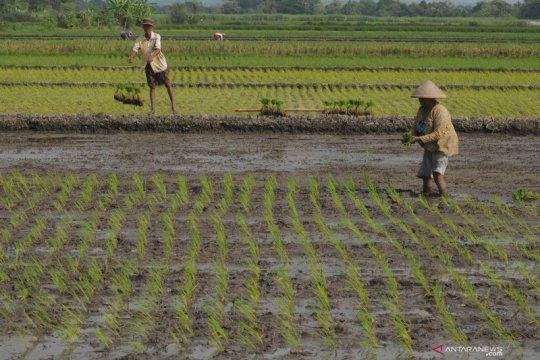 NTP April turun, Serikat petani minta stimulus segera diberikan