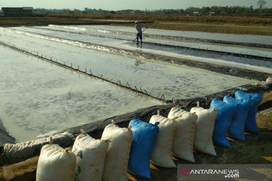 Kemenko Maritim minta standar produksi garam ditingkatkan