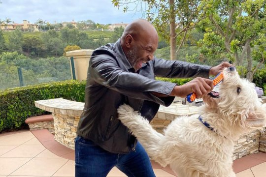 Rencana Tyson naik ring lagi disambut antusias
