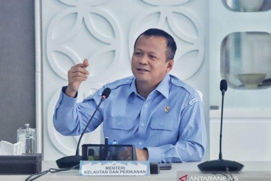 Menteri KP: Ekspor benih lobster diperbolehkan, namun ini syaratnya