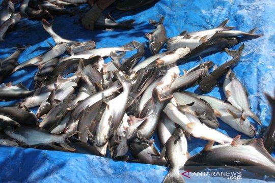 KKP gandeng UNIDO buat pelatihan pembenihan ikan patin dan lele