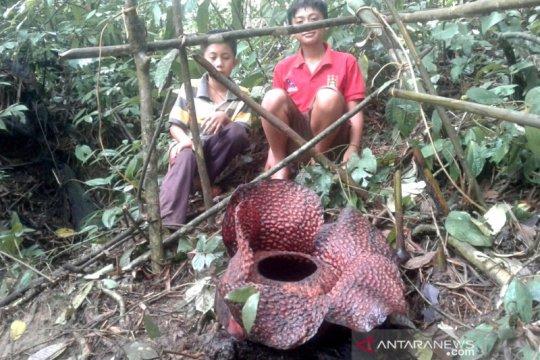 Desa Tanjung Alam habitat bunga rafflesia
