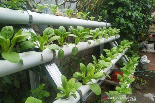 Dosen Pertanian : hidroponik bisa obati stres selama COVID-19