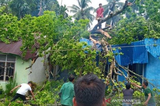 Pohon tumbang timpa rumah, tiga warga Nagan Raya terluka, satu pingsan