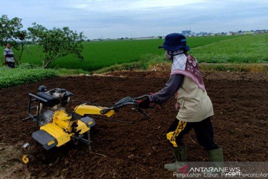 Kaum milenial diajak terjun ke dunia pertanian