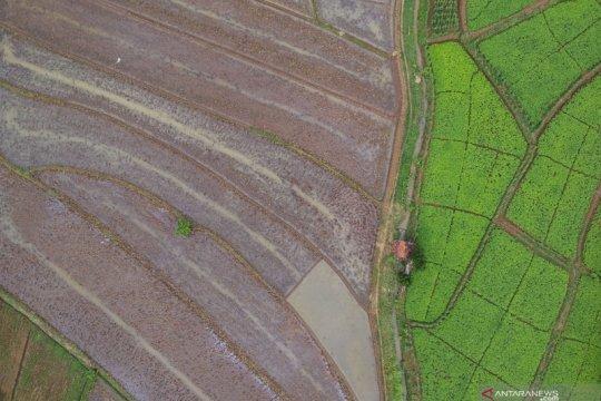 Menteri PUPR: Sawah baru di Kalteng dikerjakan dengan investasi BUMN