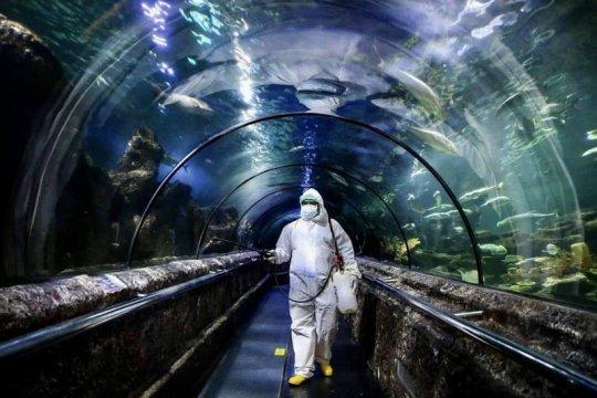 Hadapi pandemi COVID-19, kebun binatang terapkan metode khusus