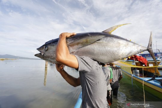 Dorong potensi perikanan, Bappenas imbau ikan jadi menu utama di rumah