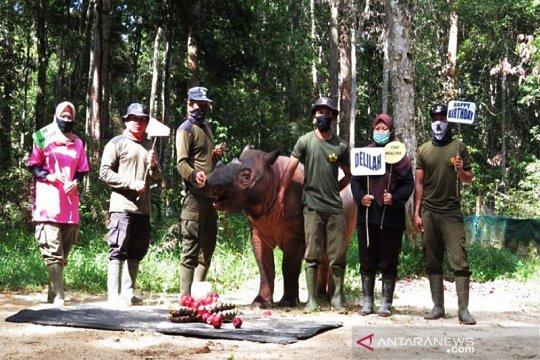 Kemarin, update kasus COVID-19 hingga perayaan ulang tahun badak