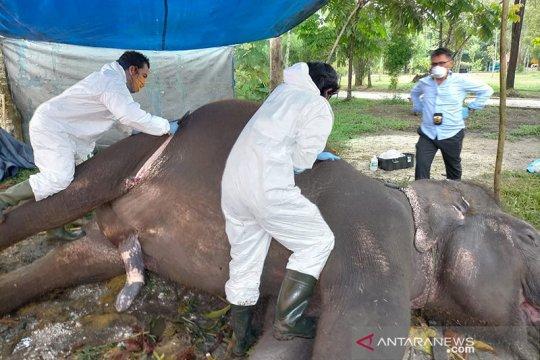 BBKSDA Riau ungkap penyebab kematian gajah di Bonbin Kasang Kulim