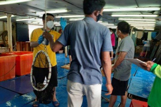 KKP dorong ekspor komoditas ikan kerapu di tengah pandemi