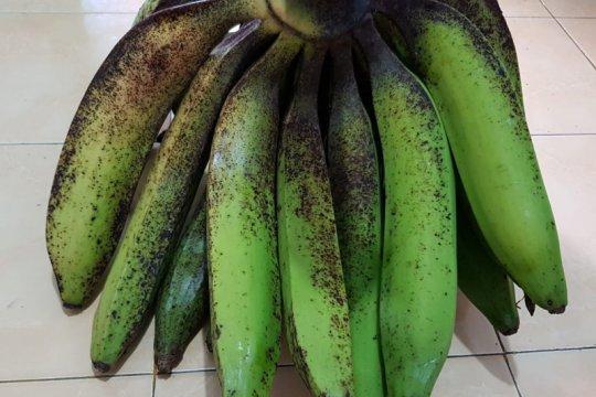 Kandungan pro-vitamin A pisang lokal lebih tinggi dari pisang impor