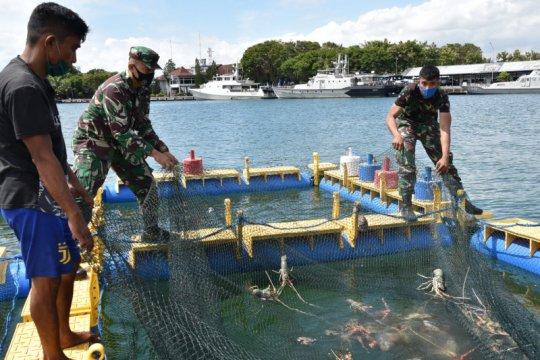 Lantamal VI budi daya lobster-ikan laut dukung ketahanan pangan