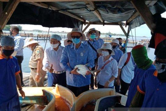 Penjualan ikan dari Kepulauan Seribu melonjak selama COVID-19