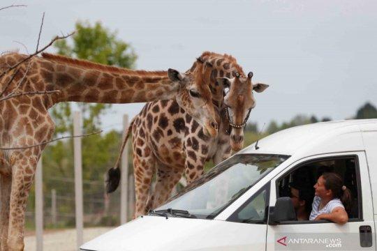 Akibat pandemi COVID-19, seorang pengusaha sirkus ubah bisnisnya jadi taman safari