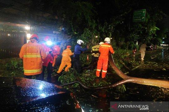 Pohon tumbang di Jaksel timpa penyandang tuna rungu