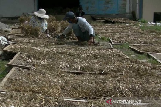 Pembelian bawang putih PNS Temanggung belum kurangi stok petani