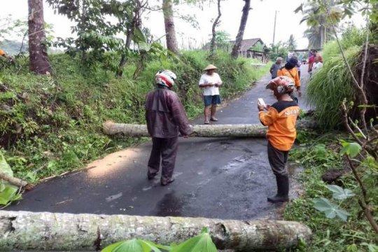 Angin kencang tumbangkan beberapa pohon di Magelang