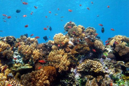 "Mission Blue deklarasikan KKP Nusa Penida sebagai ""Hope Spot"""