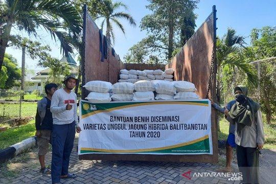 Balitbangtan salurkan benih jagung toleran kekeringan ke NTT