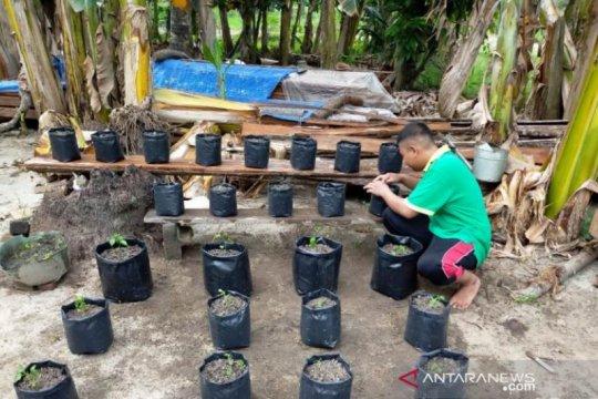 Saat pandemi, mahasiswa Polbangtan Medan manfaatkan pekarangan