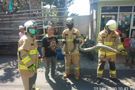 Damkar Jaktim evakuasi binatang hingga penyemprotan disinfektan