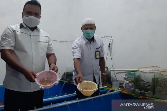 Polda Jambi gagalkan penyelundupan 44.800 ekor benih lobster