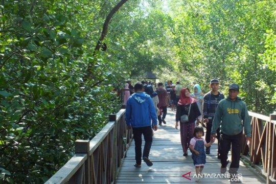 Perlindungan 3,49 juta ha mangrove lebih penting dari rehabilitasi
