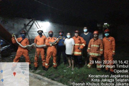 Damkar Jaksel evakuasi sanca batik dalam paralon pada Kamis dini hari