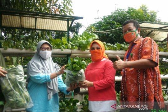 Sudin LH Jakpus panen sayuran hidroponik