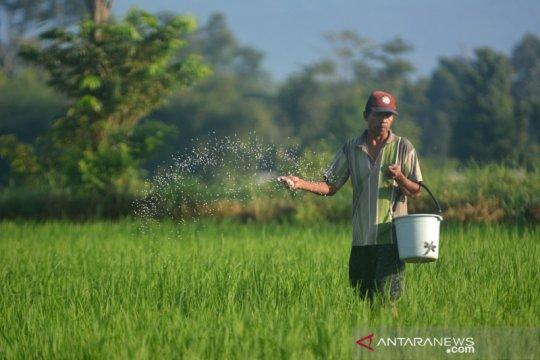 Pusri luncurkan Program Agro Solution, bantu petani dongkrak produksi