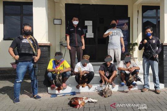 Judi sabung ayam, Polres Pasaman Barat tangkap dua tersangka