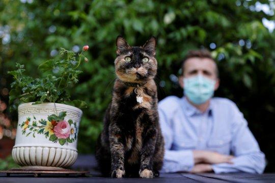 Kucing di Prancis selamat dari infeksi virus corona
