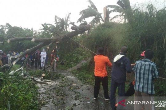 Hujan deras di Kota Bogor, pohon tumbang di empat lokasi.