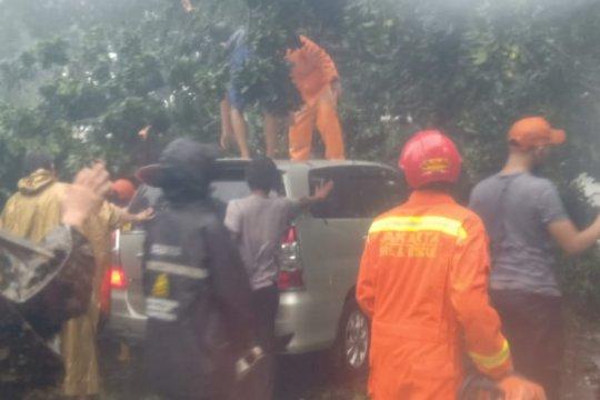 Pohon tumbang timpa minibus dan merusak instalasi listrik di Cipayung