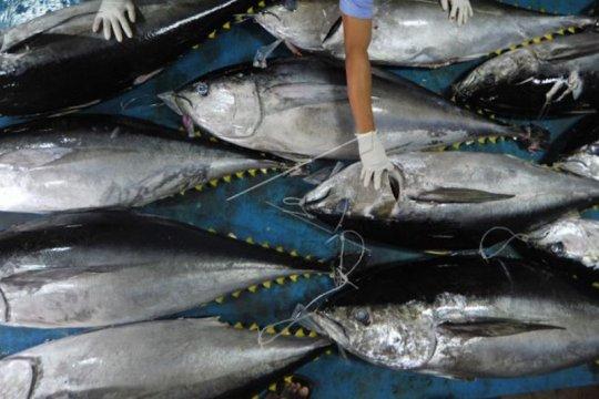 Pengamat: Peningkatan ekspor perikanan harus berdampak pada UMKM