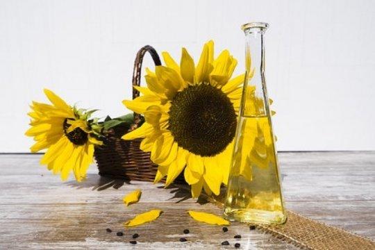 Manfaat minyak bunga matahari untuk kecantikan