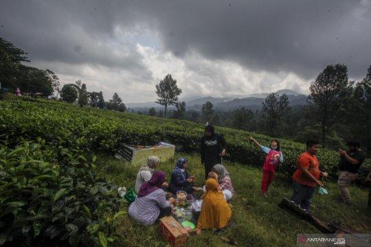 Wisatawan mulai kunjungi kawasan Puncak Bogor