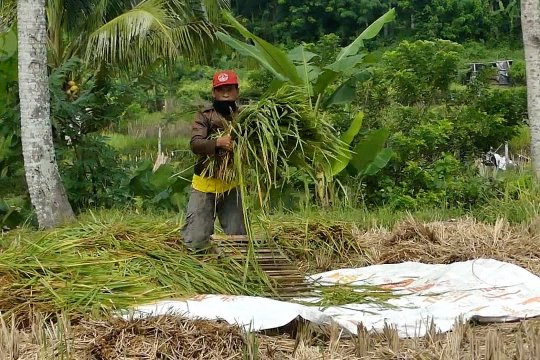 Surplus 30 ribu ton untuk ketersediaan pangan di masa COVID-19