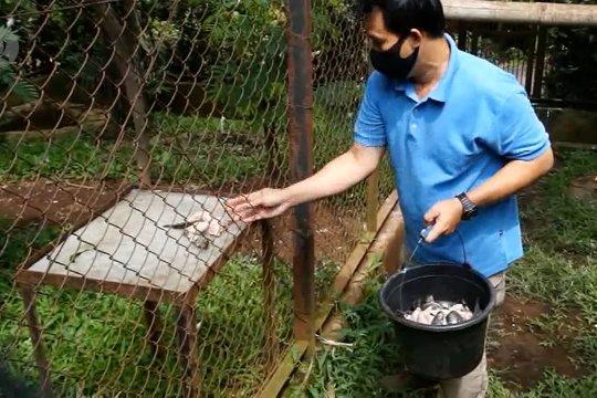 Bantuan bagi kebutuhan pakan satwa di kebun binatang