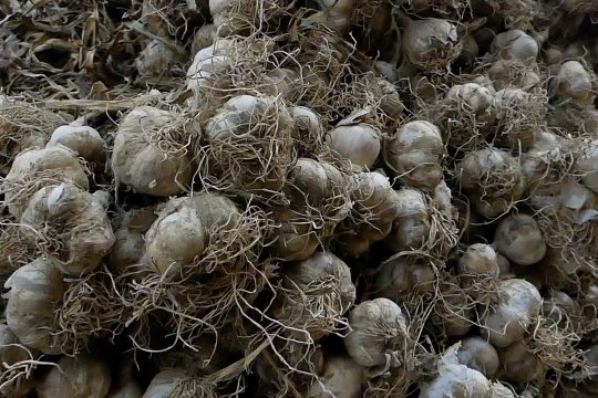 PNS Temanggung wajib beli bawang putih dan cabai petani